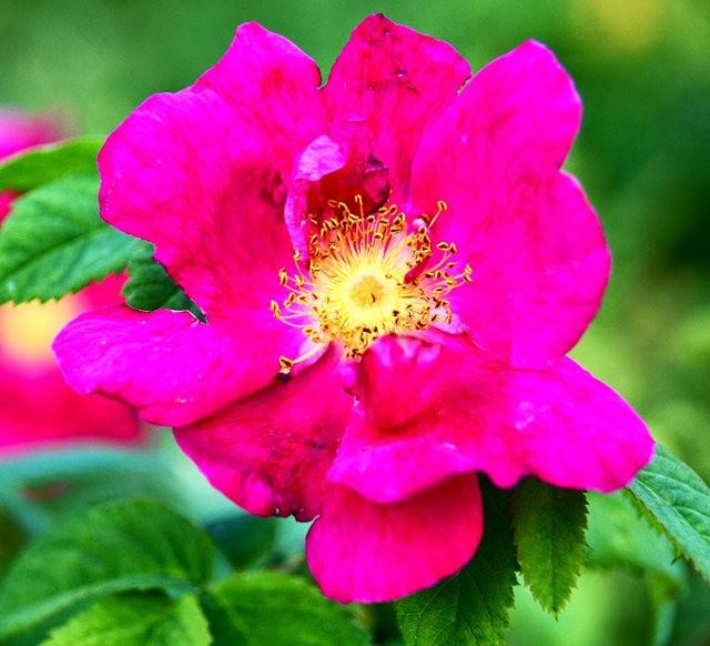 莫里安瓦法师学院的玫瑰  2_图1-7