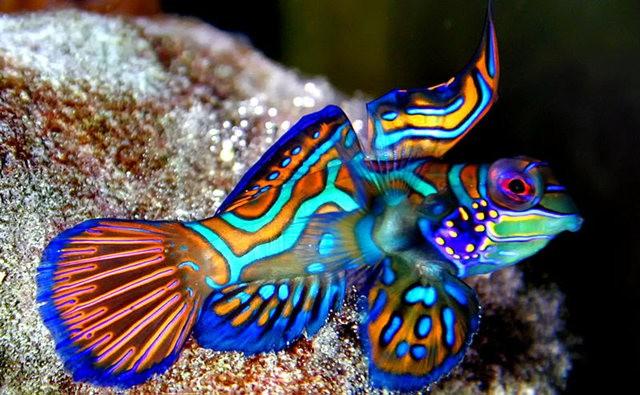 里斯本海洋水族馆-----花斑连鳍_图1-1