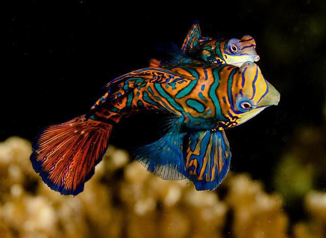 里斯本海洋水族馆-----花斑连鳍_图1-2