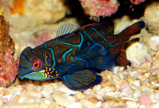 里斯本海洋水族馆-----花斑连鳍_图1-3