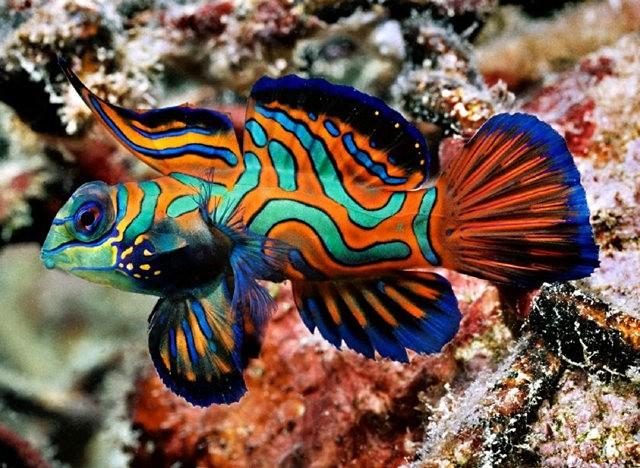里斯本海洋水族馆-----花斑连鳍_图1-4