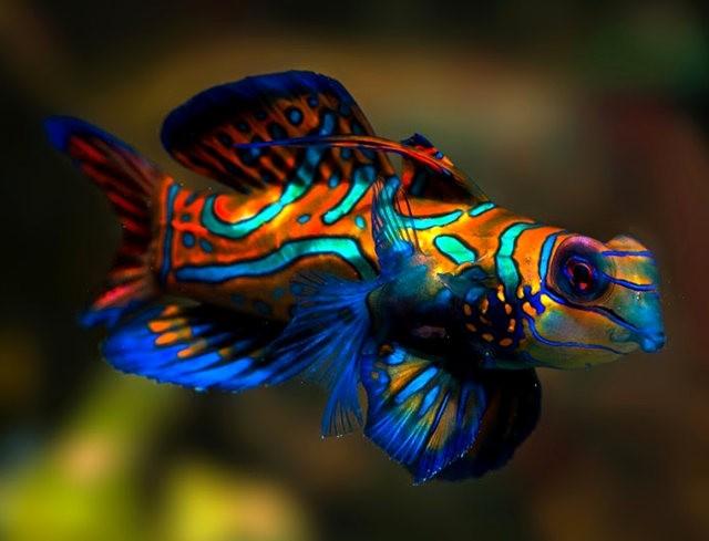 里斯本海洋水族馆-----花斑连鳍_图1-5