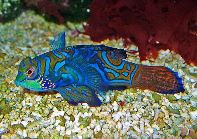 里斯本海洋水族馆-----花斑连鳍_图1-6