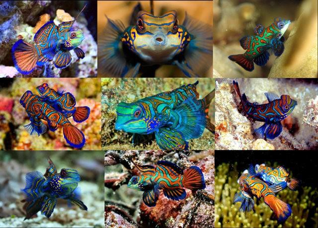 里斯本海洋水族馆-----花斑连鳍_图1-7