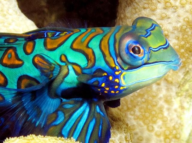 里斯本海洋水族馆-----花斑连鳍_图1-8