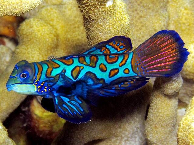 里斯本海洋水族馆-----花斑连鳍_图1-9