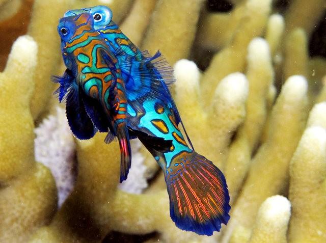 里斯本海洋水族馆-----花斑连鳍_图1-10
