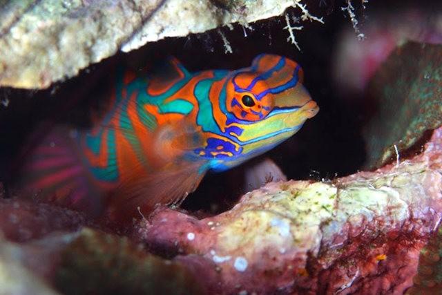 里斯本海洋水族馆-----花斑连鳍_图1-11