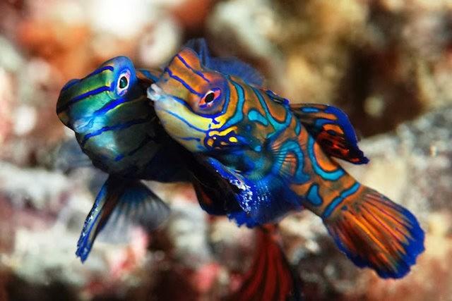 里斯本海洋水族馆-----花斑连鳍_图1-12