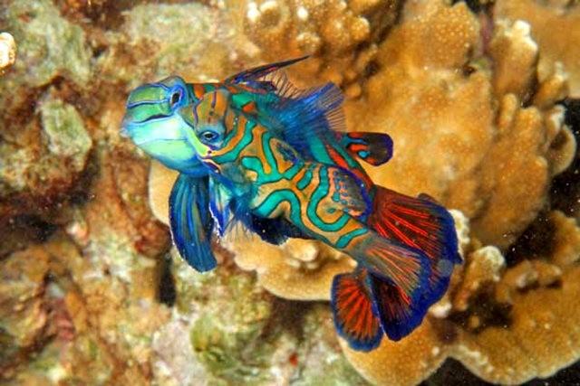 里斯本海洋水族馆-----花斑连鳍_图1-13