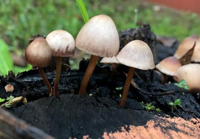 树林宝物----蘑菇_图1-2