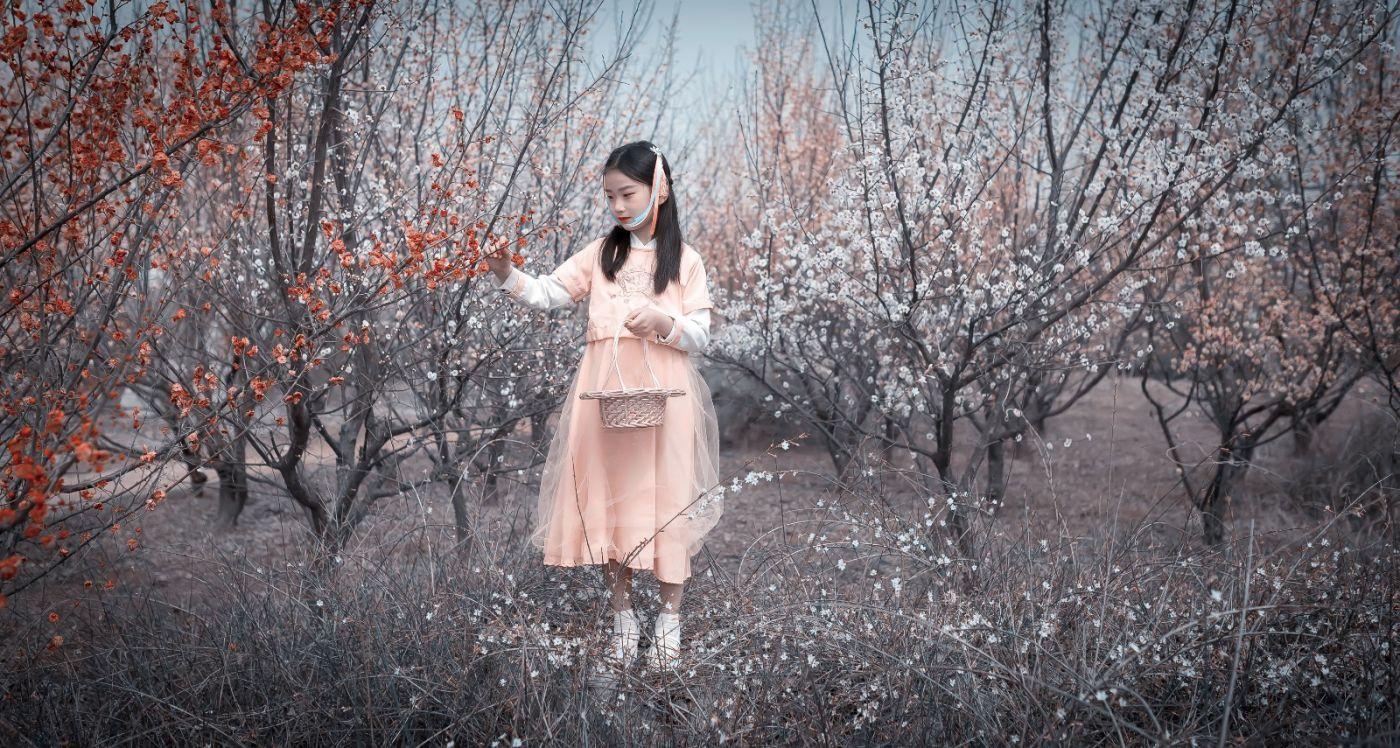 梅林馀妍不争春 小小仙女下凡尘 在费县拍摄小小仙女候依琳_图1-6