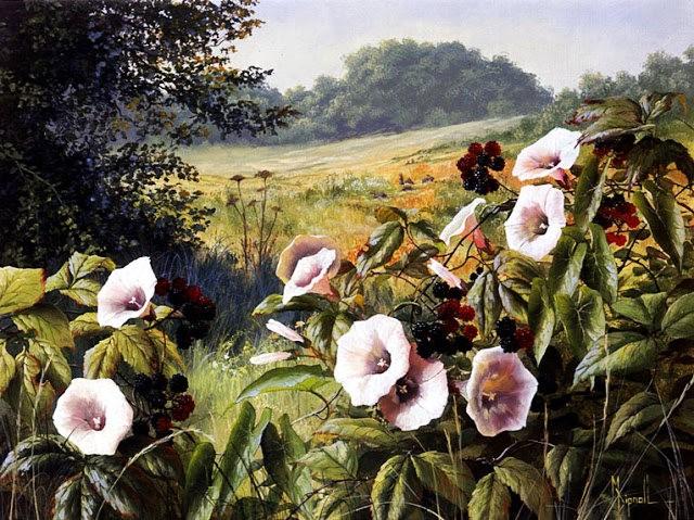 英格兰画家玛丽Dipnall的野生花卉画作_图1-7