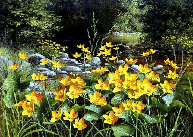 英格兰画家玛丽Dipnall的野生花卉画作_图1-8