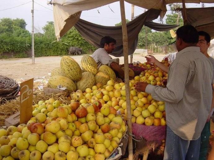 中国包下巴基斯坦上万吨的滞销水果 让国内吃货们高兴乐的不得了 ..._图1-7