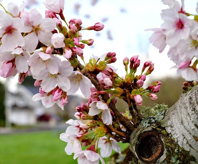 春回大地_图1-1