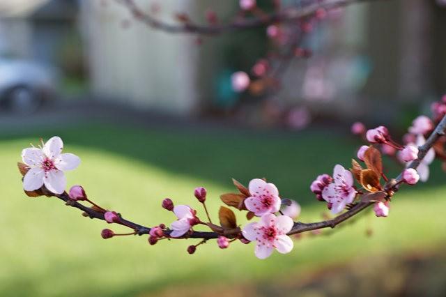 春回大地_图1-9