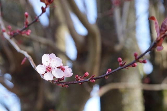 春回大地_图1-10