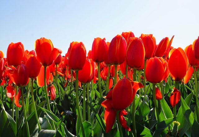 春回大地_图1-24