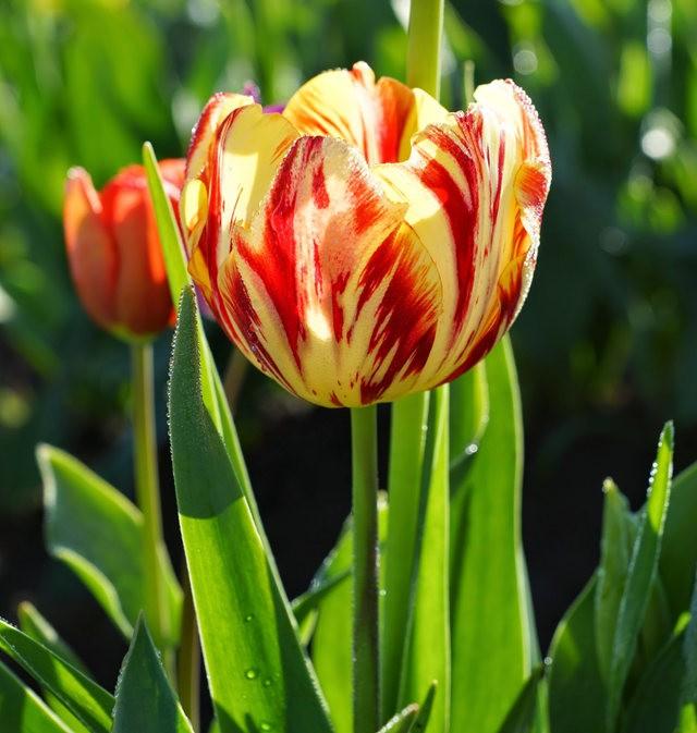 春回大地_图1-25