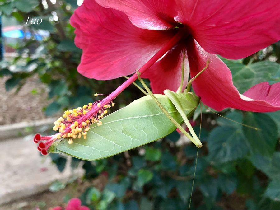 【小虫摄影】在埃塞俄比亚_图1-19