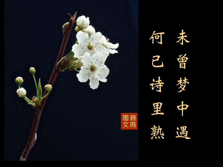 【晓鸣图文】摄影+13对句/2019作_图1-3