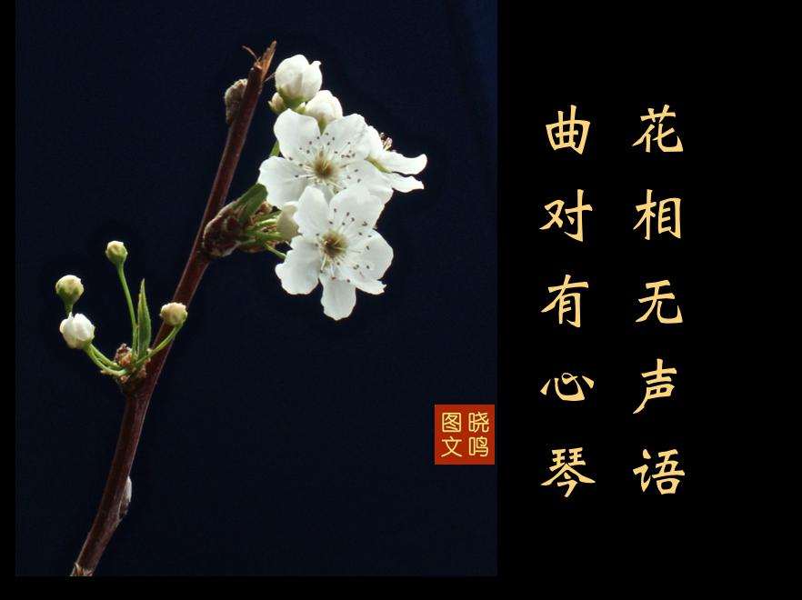 【晓鸣图文】摄影+13对句/2019作_图1-4