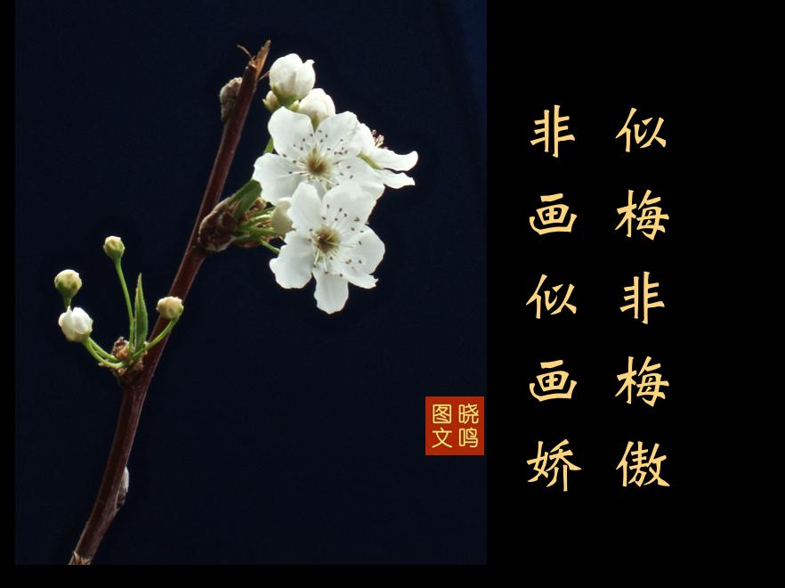 【晓鸣图文】摄影+13对句/2019作_图1-2