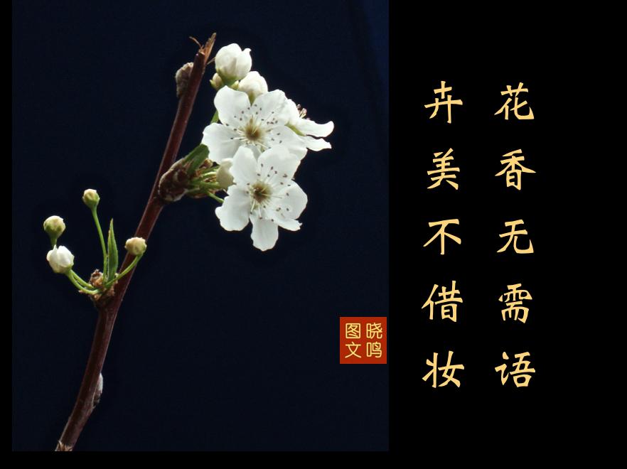 【晓鸣图文】摄影+13对句/2019作_图1-12