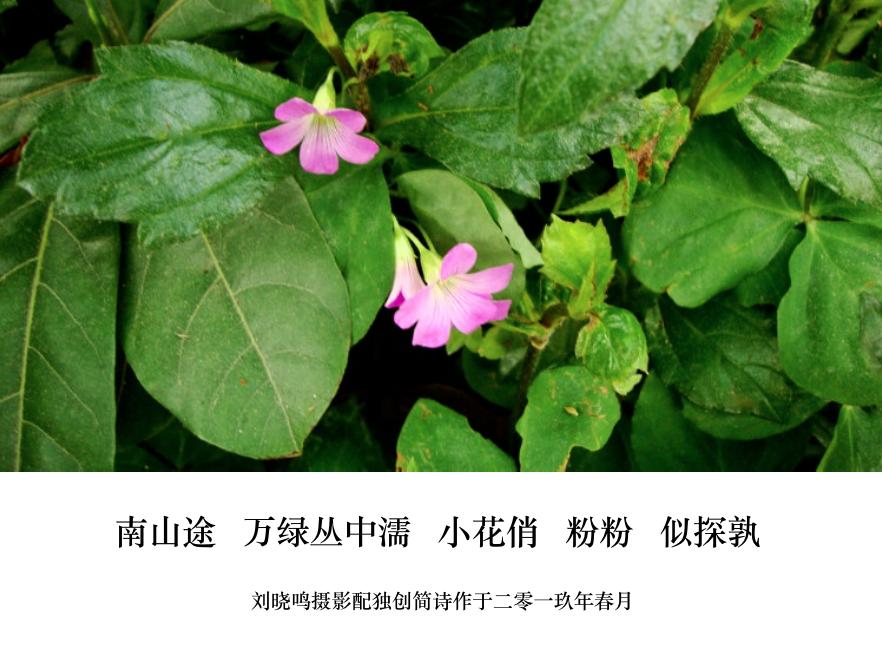 【晓鸣图文】摄影简诗日记_图1-1
