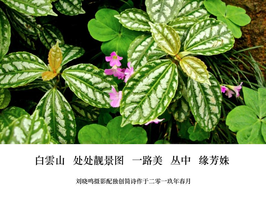 【晓鸣图文】摄影简诗日记_图1-2