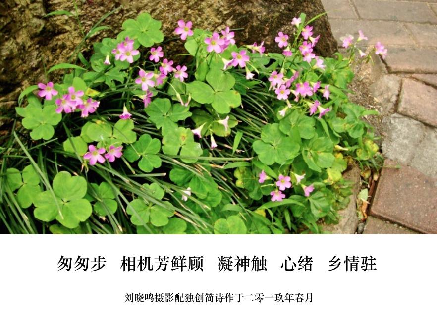 【晓鸣图文】摄影简诗日记_图1-3