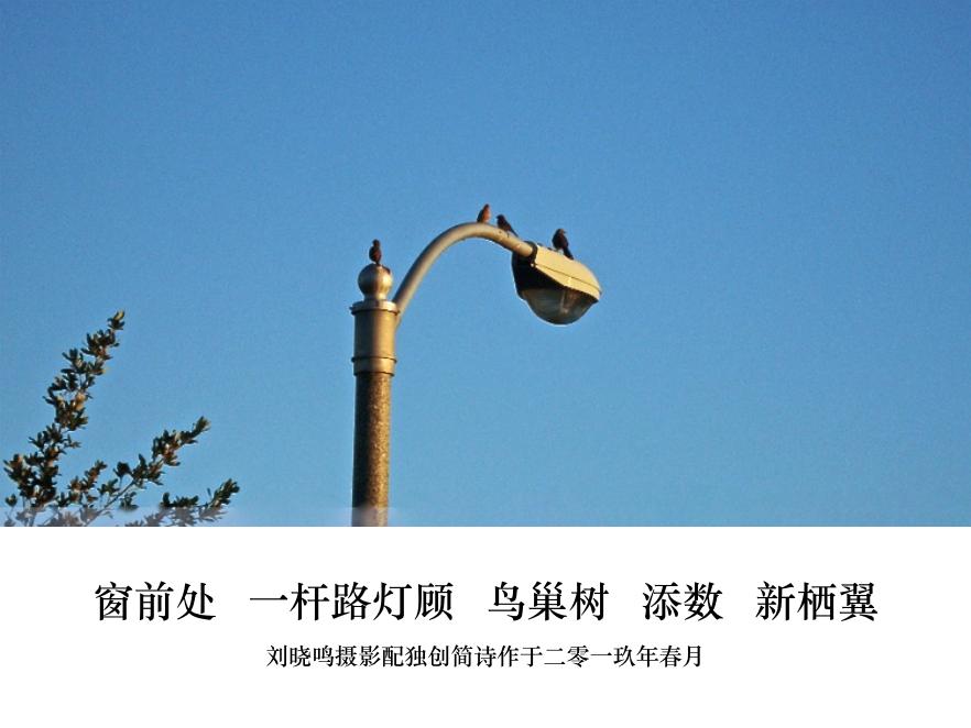 【晓鸣图文】摄影简诗日记篇_图1-4