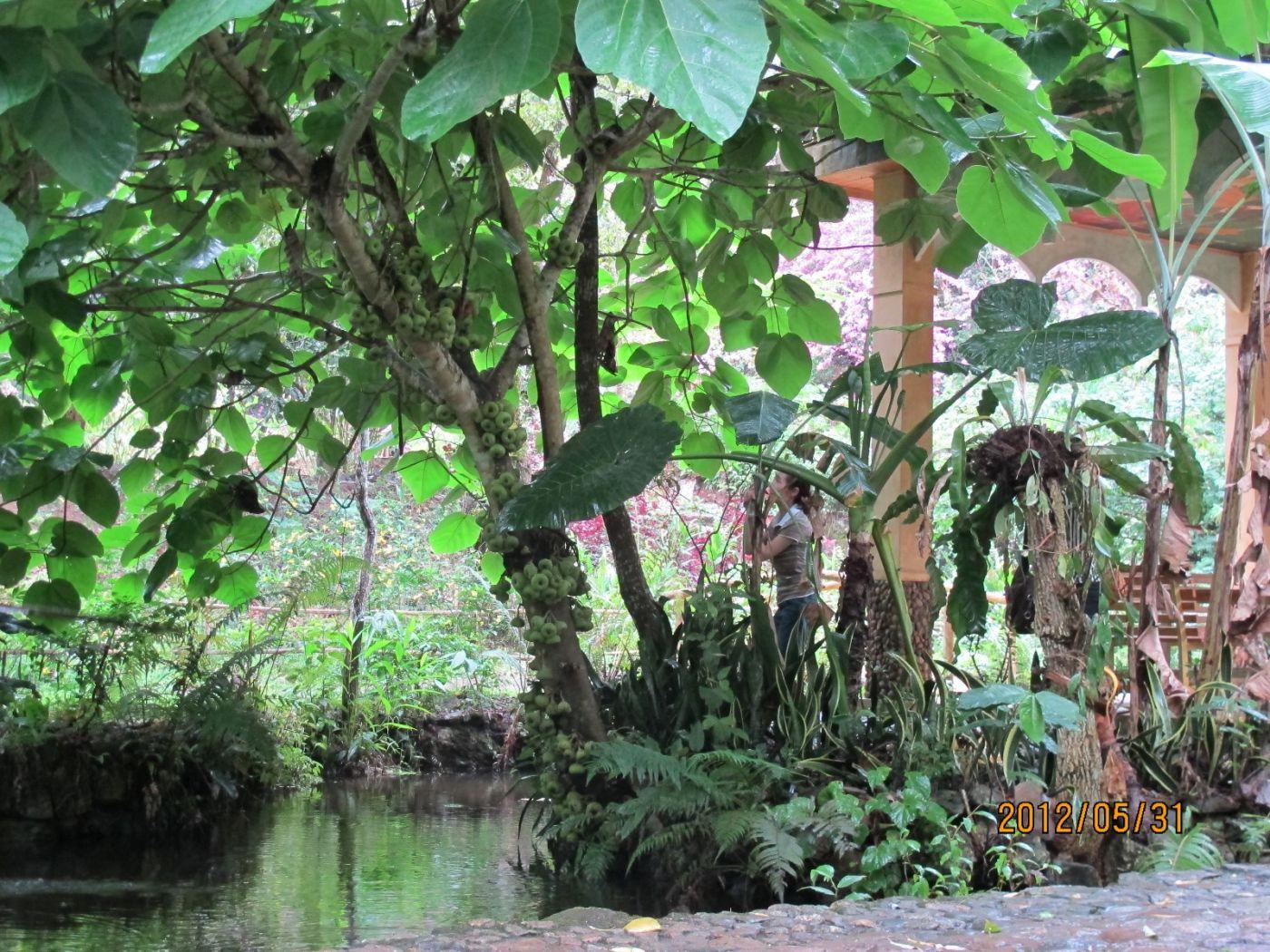 莫里热带雨林_图1-5