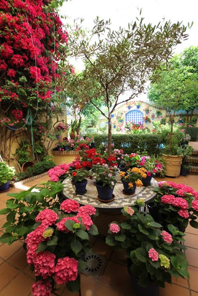 科尔多瓦的庭园_图1-34