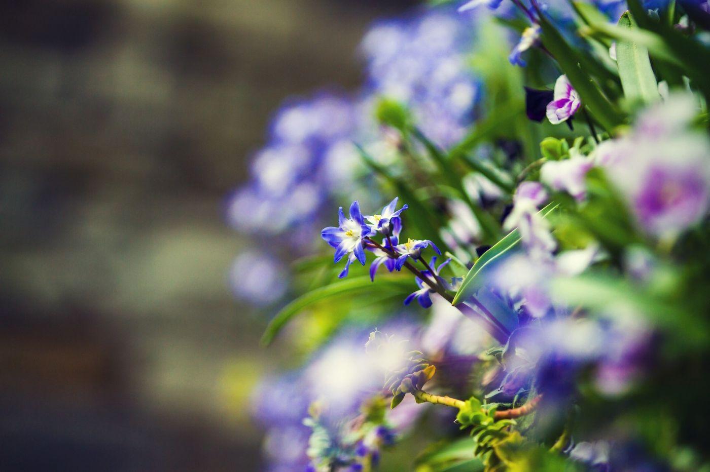 初春的脚步_图1-9
