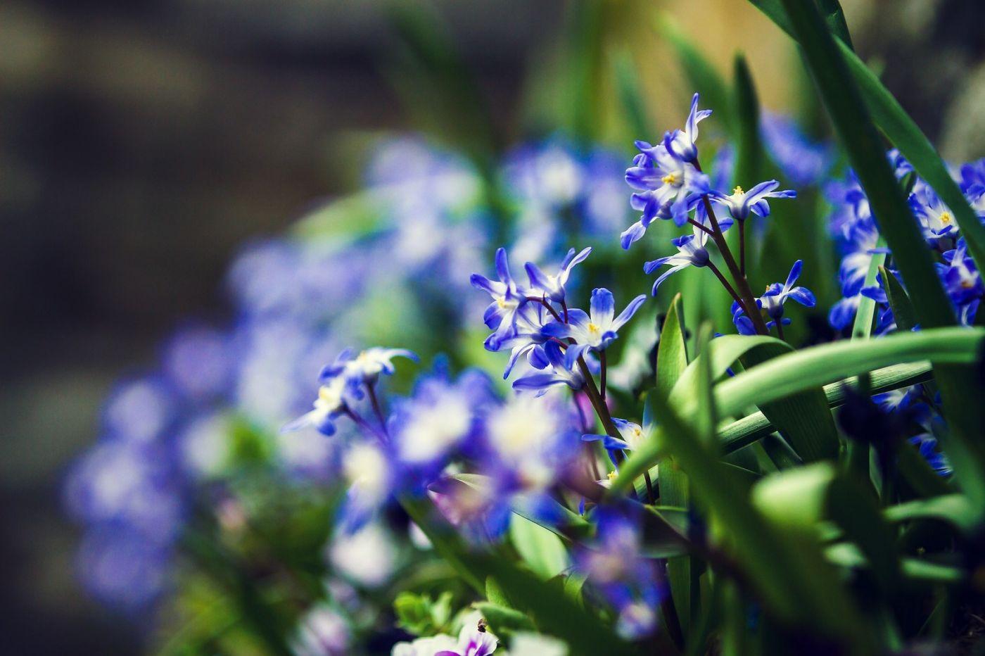 初春的脚步_图1-5
