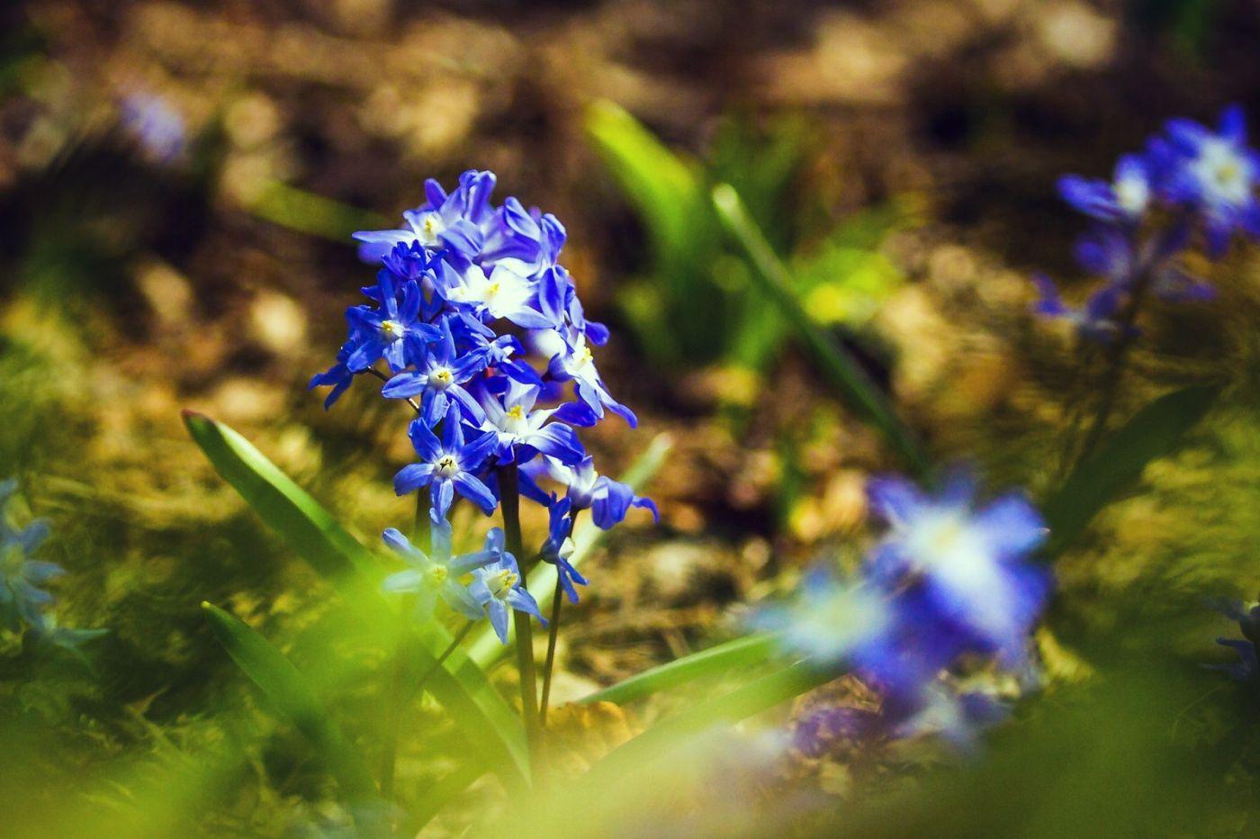 初春的脚步_图1-3