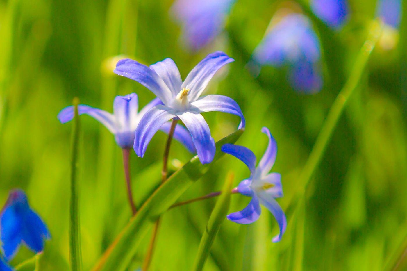 初春的脚步_图1-23