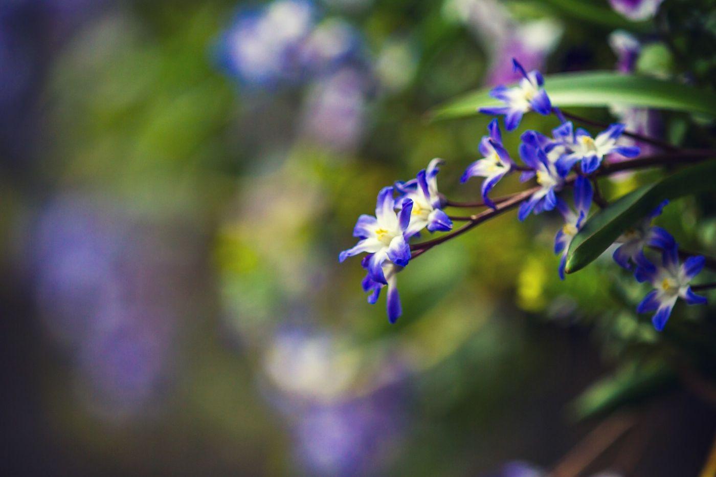 初春的脚步_图1-28