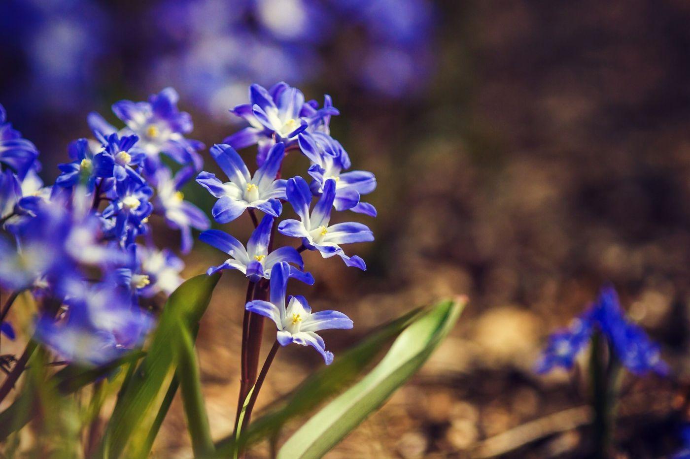 初春的脚步_图1-27
