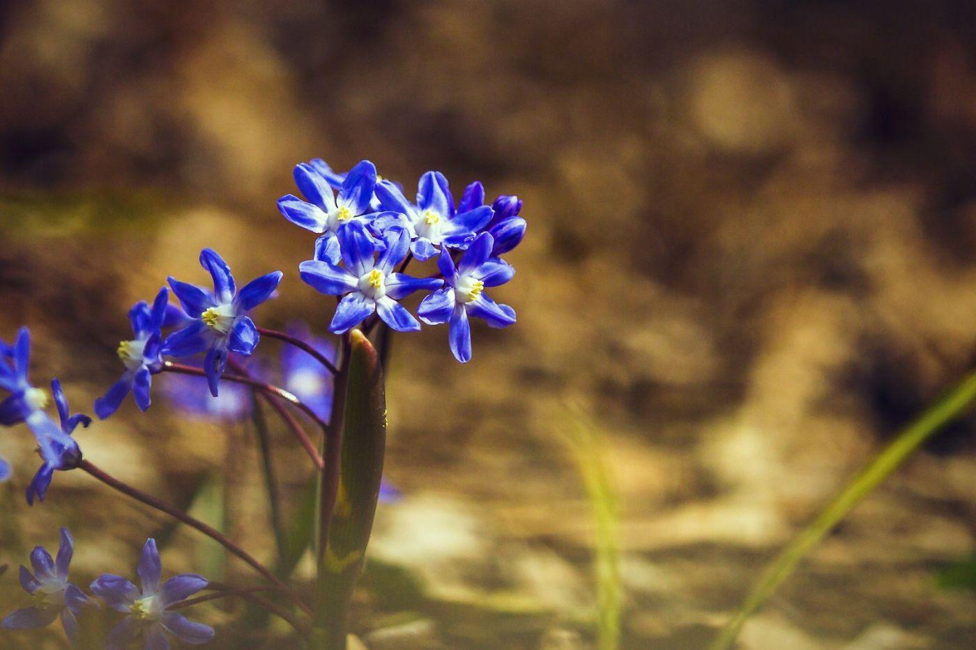 初春的脚步_图1-31