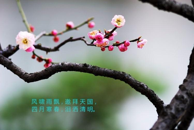 【清明,泪洒风雨寒春】_图1-1
