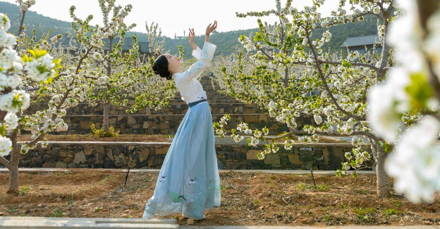 发现民族舞女孩吕锦涛 在樱桃花开白如雪的马泉翩翩起舞_图1-6