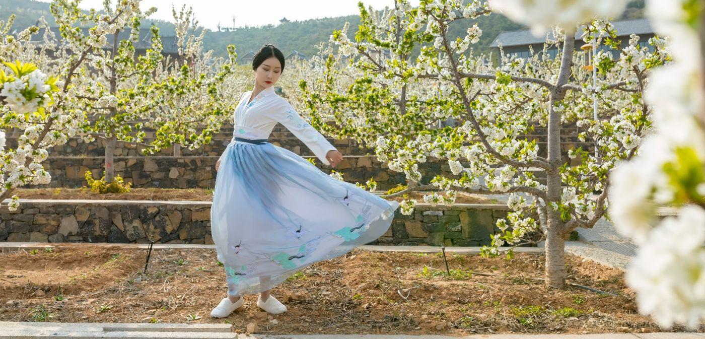 发现民族舞女孩吕锦涛 在樱桃花开白如雪的马泉翩翩起舞_图1-7
