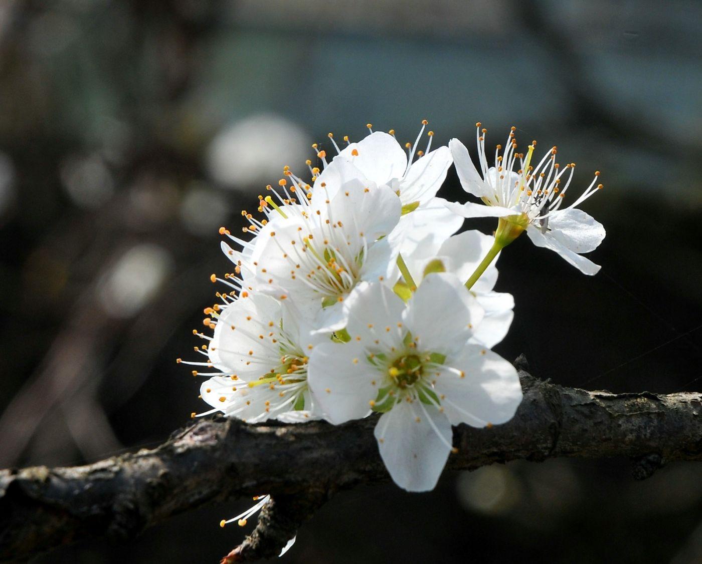 三月三上巳节(绝句)_图1-1