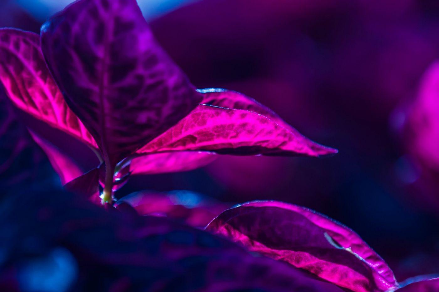 火红的季节_图1-31