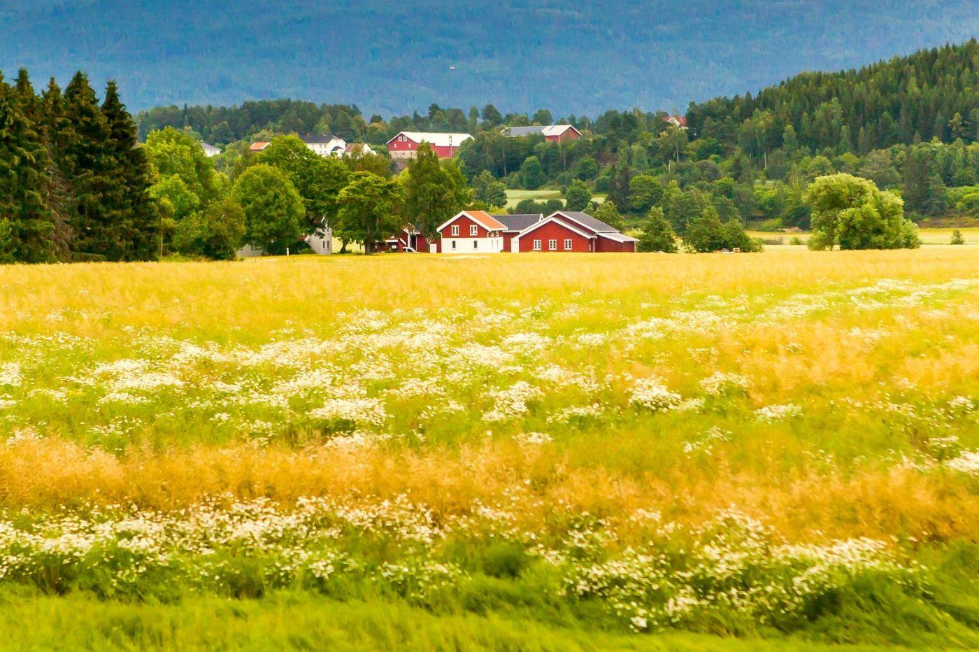 北欧旅途,美丽的田园_图1-13
