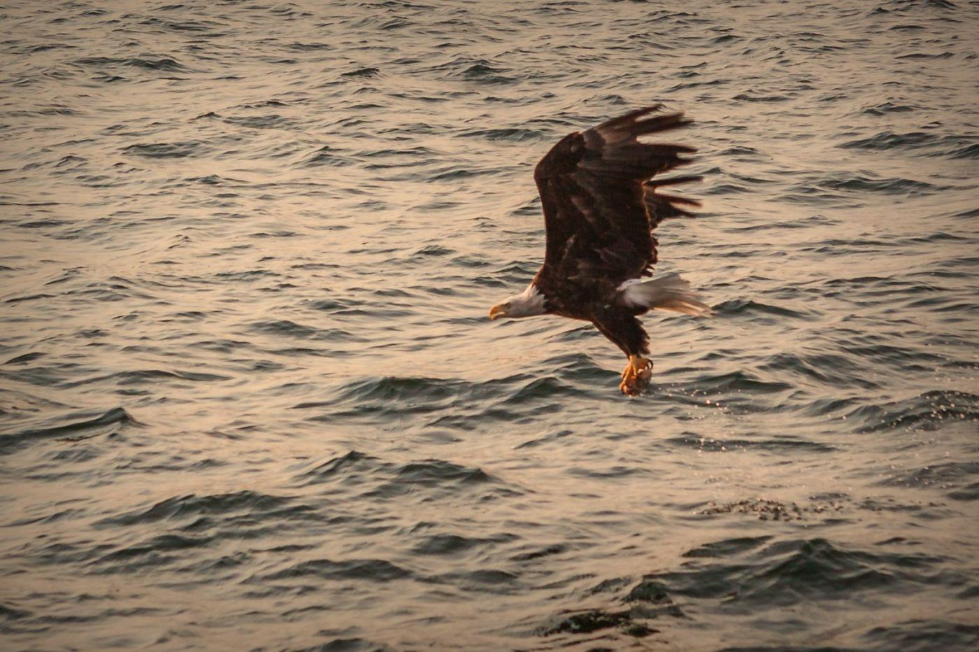 加拿大Nova Scotia, 帆船灯塔老鹰_图1-4