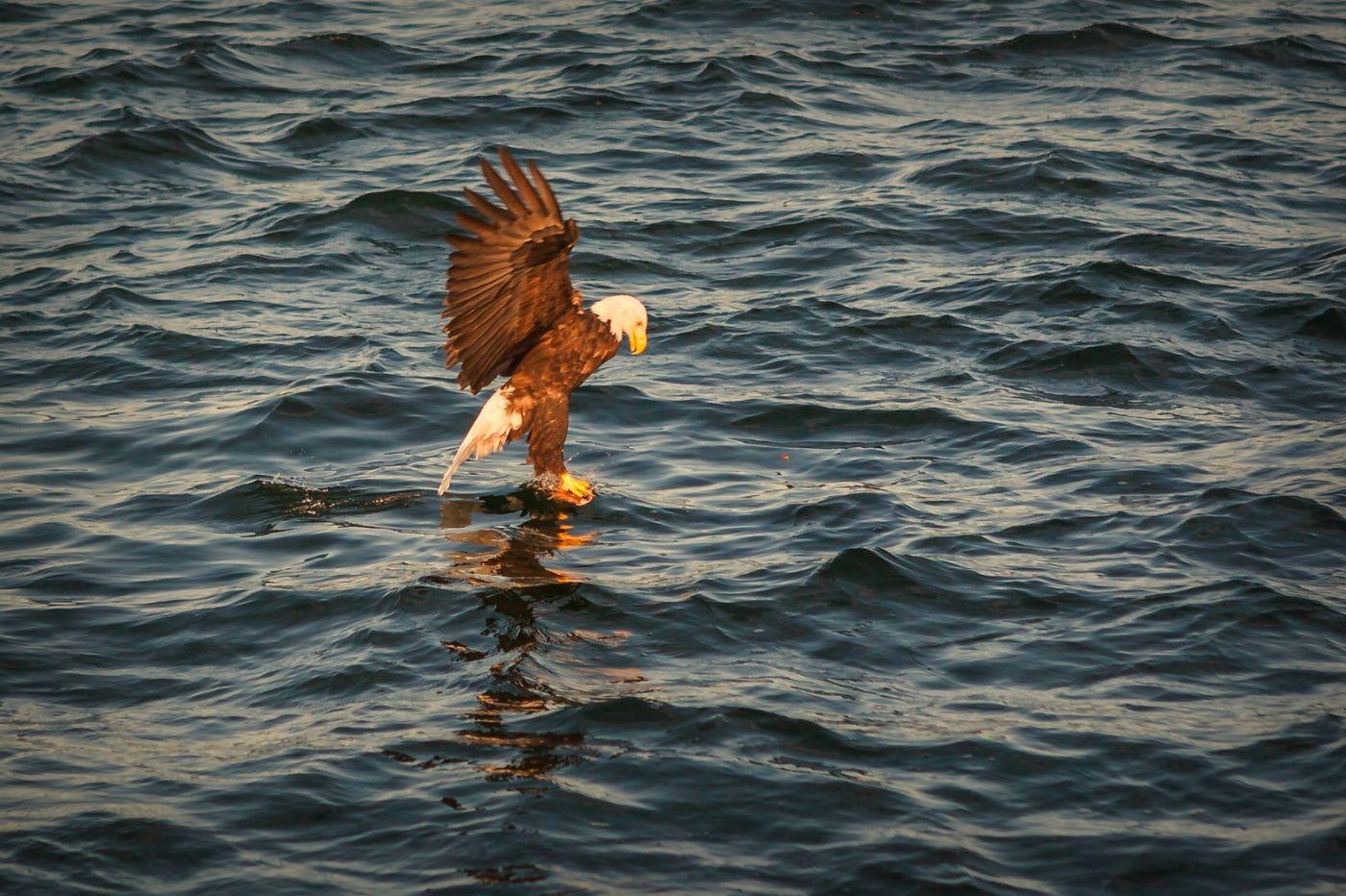 加拿大Nova Scotia, 帆船灯塔老鹰_图1-22